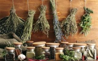 Травы для восстановления печени и лечения варикоза