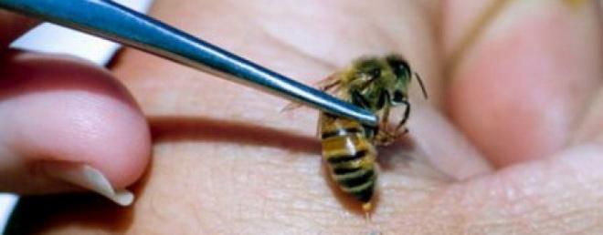 Польза пчелиного меда