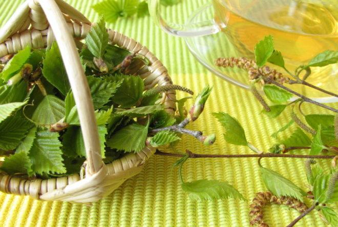 Настой из листьев березы