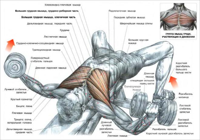 Упражнения для плечевого пояса при варикозе