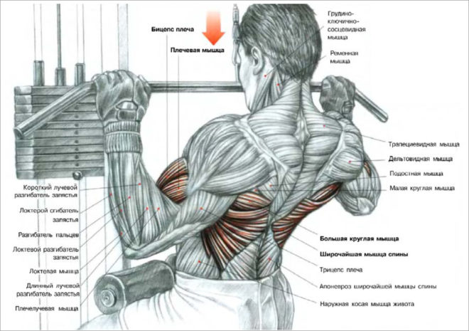 Упражнение для спины при варикозе
