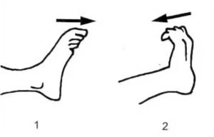 Сгибание и разгибание пальцев ног