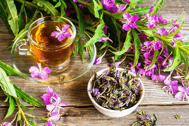 Иван-чай – один из самых полезных чаев при варикозе