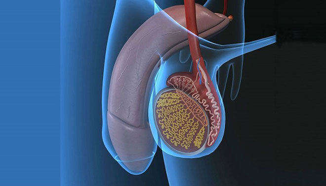 Степени заболевания варикоцеле